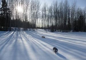 Shadows and Snow Diamonds