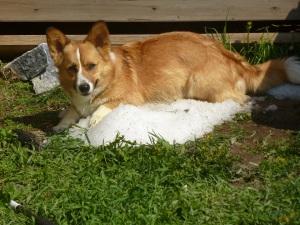Finnegan on a pile of hail