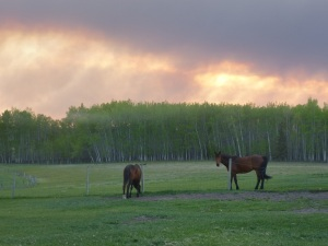 Smokey pasture