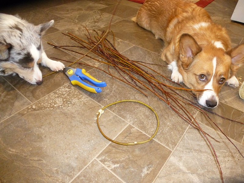 taz & Finn help make a willow frame