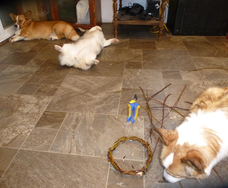 worn out corgi helpers